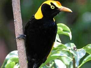 Bird Week takes flight in the Scenic Rim