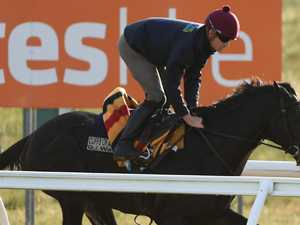 Imports give top trainer best ever Cup chance