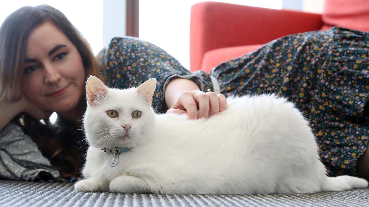 Lilly Piri, 33 of Brisbane, at home with her tubby cat Coco, who weights in at 8kg. Picture: Liam Kidston