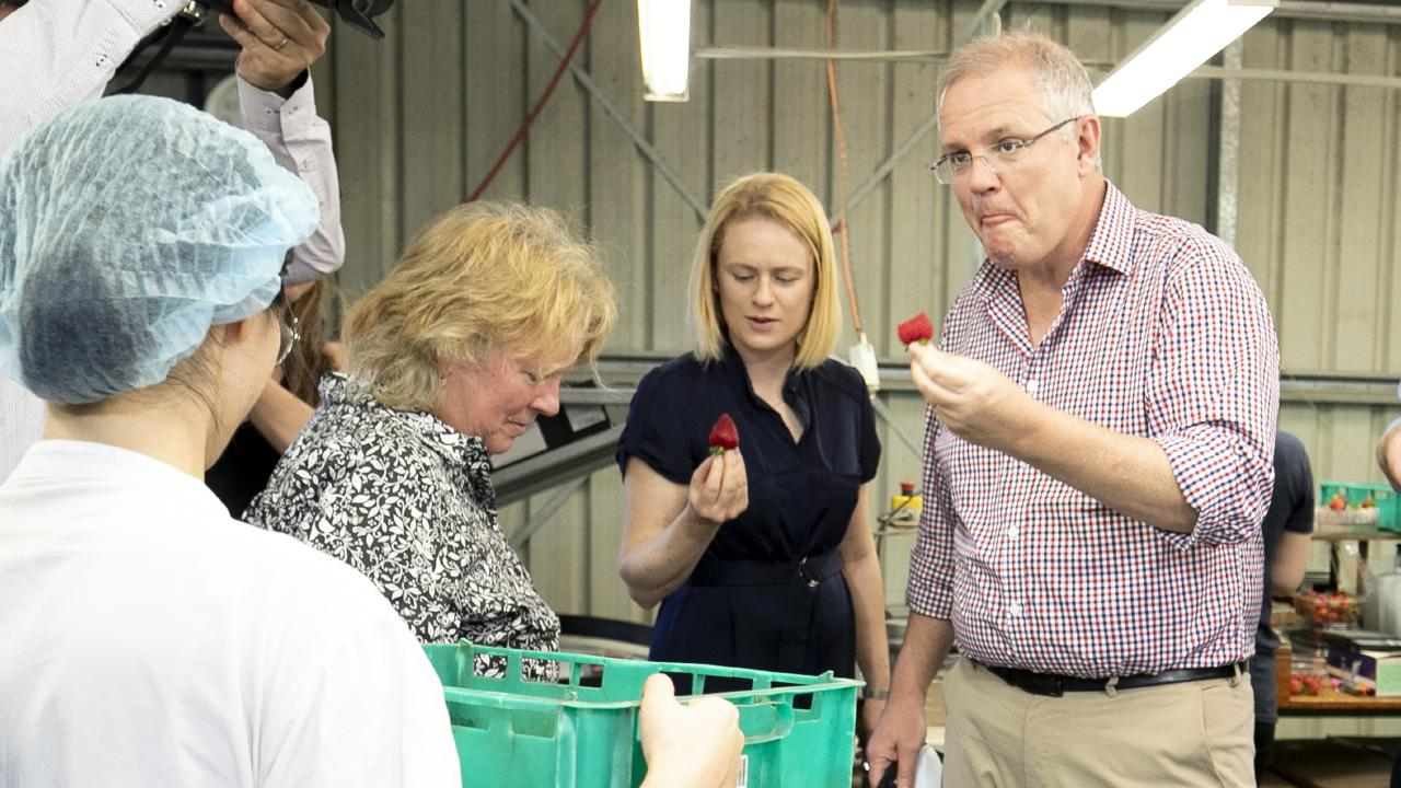 Prime Minister Scott Morrison visits a strawberry farm at Chambers Flat in Logan yesterday. Picture: AAP/Tim Marsden