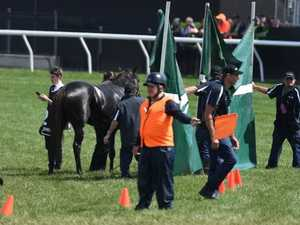 PETA demands probe into Cup horse death