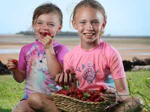 Singing praises of strawberry favourite