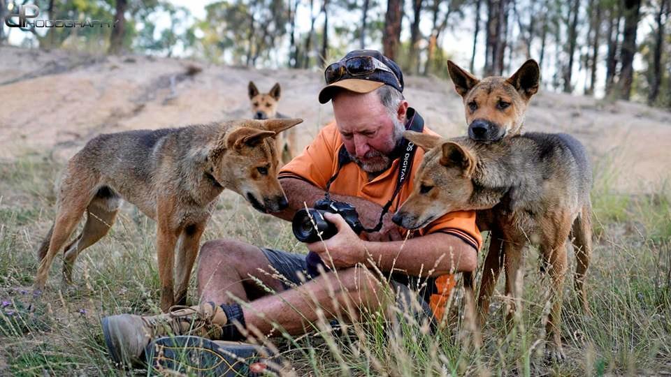 WILDLIFE CARER: Sanctuary owner Simon Stretton with his dingoes at the Durong Dingo Sanctuary.