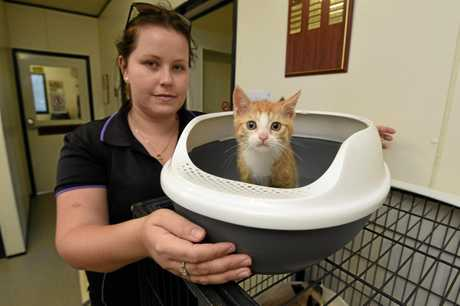 Gympie businesses can have their confidential documents turned into kitty litter for free this month.