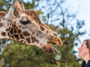 Beloved giraffe Mukulu dies at 23