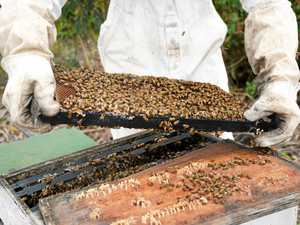 "Oz beekeepers ""devastated"" by bushfires"