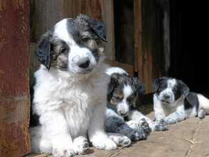 Animal welfare team pulls off biggest rescue mission yet