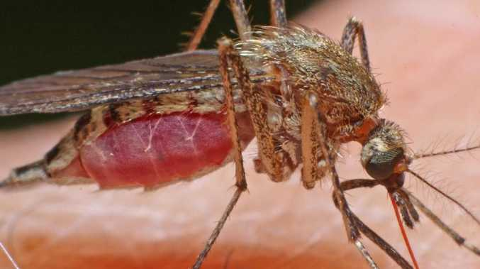 Indonesia's Health Ministry has warned about Japanese encephalitis