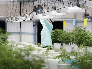 $500m to build world's biggest cannabis farm