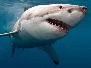 WA man flown to hospital after shark bite