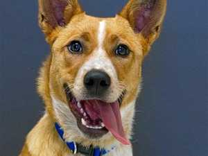 Pets who are desperately seeking a new home