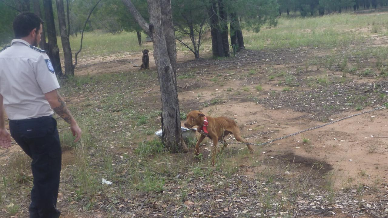 A dog tied up at the property. Photo Supplied RSPCA
