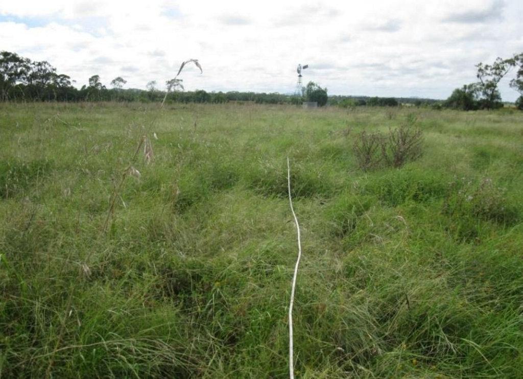 Grassland featuring finger panic grass (digitaria porrecta) near Acland.