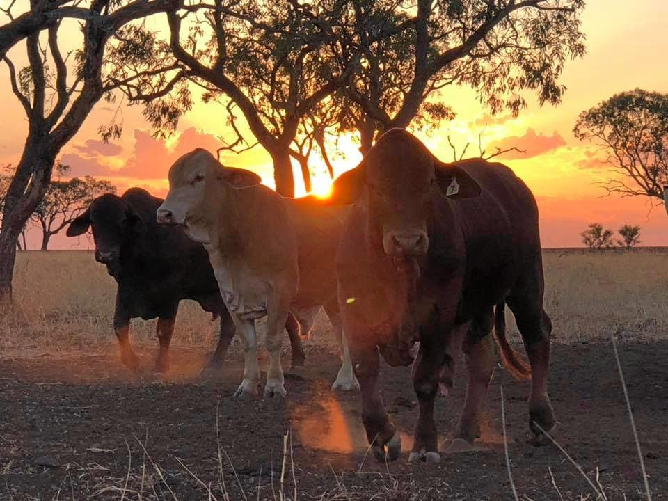 LETTER: In the Gympie region alone, beef production it is a multi-million dollar industry. There are many family owned and run businesses which need our support and the backing of governments. Our producers need access to better roads.