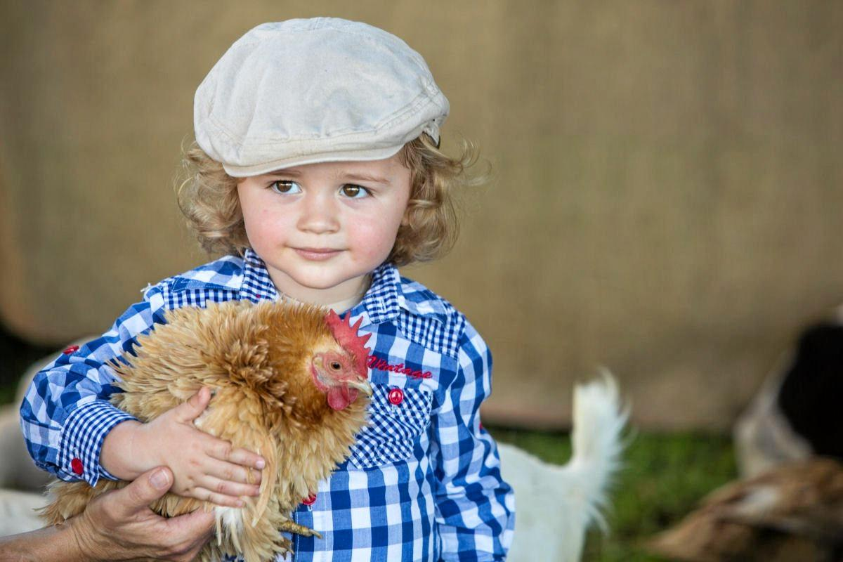 CLUCKY: The humble chook will be the theme at 2018's Bangalow Show.