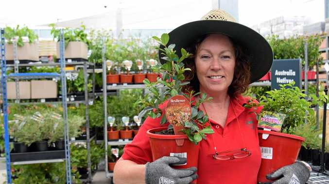 READY TO ROLL: Kerri Nicholls preparing for opening of Warwick's Bunnings Warehouse  tomorrow.