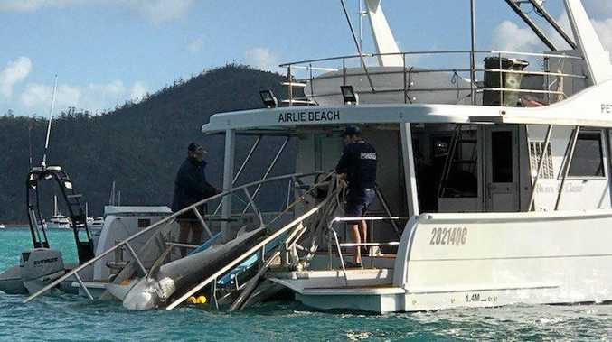 A tiger shark is retrieved from Cid Harbour after being caught in the drum lines following two attacks in September.