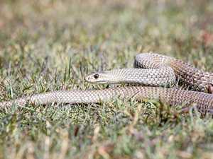 Patient taken to hospital after snake bite