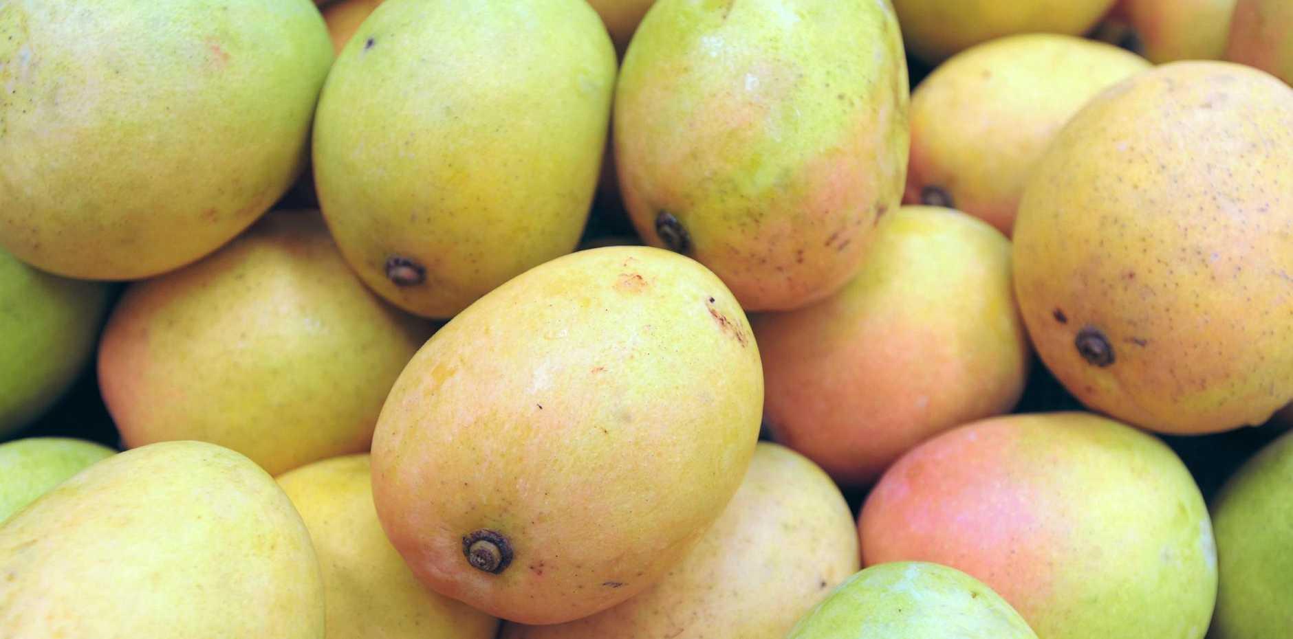 Mangoes. Photo: Alistair Brightman / Fraser Coast Chronicle