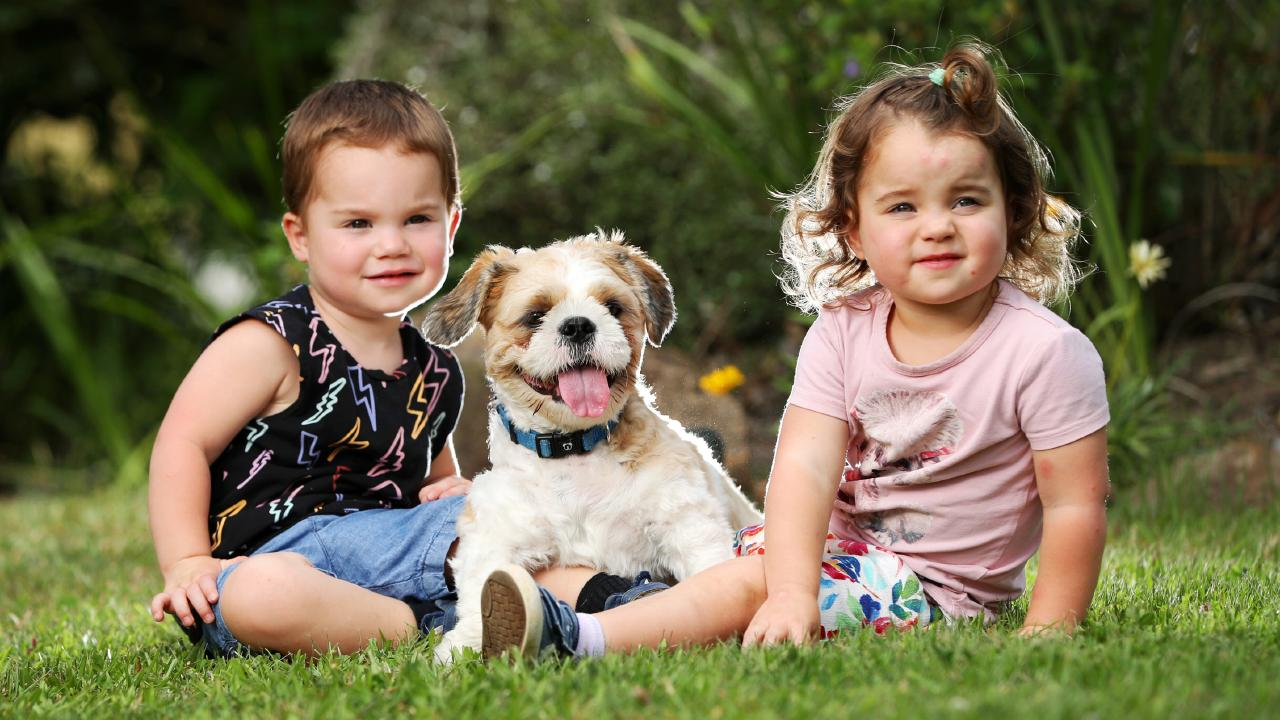 Twins Kobe and Grace, both 2, with Hercules after his two-week ordeal. Picture: Nigel Hallett