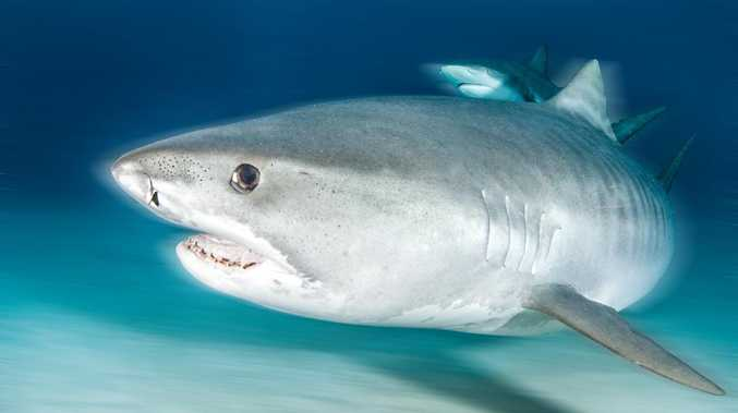Shark debate fires up in parliament