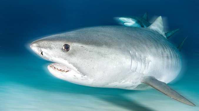 Shark debate fires up in parliament