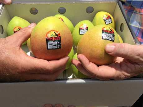 Kensington Pride mangoes.