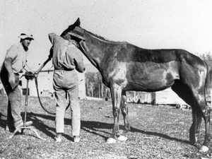 BACKWARD GLANCES: HORSES