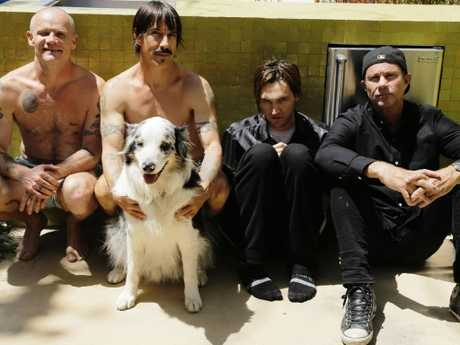 The Chili Peppers hit Australian stages in February and March. Picture: Steve Keros