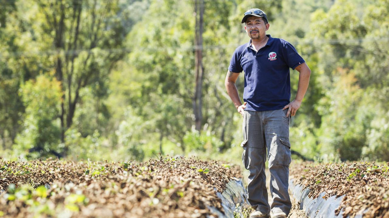 Wamuran strawberry farmer Kevin Tran was at the centre of the crisis, losing over 40 tonnes of strawberries and over $500,000 in sales