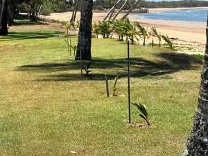 Beach coconut planters 'think they're a law unto themselves'