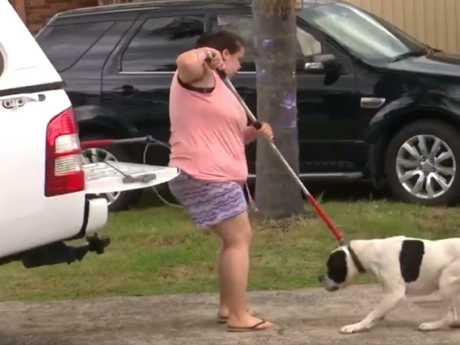 Even the dog's owner struggled. Picture: 7 News Sydney