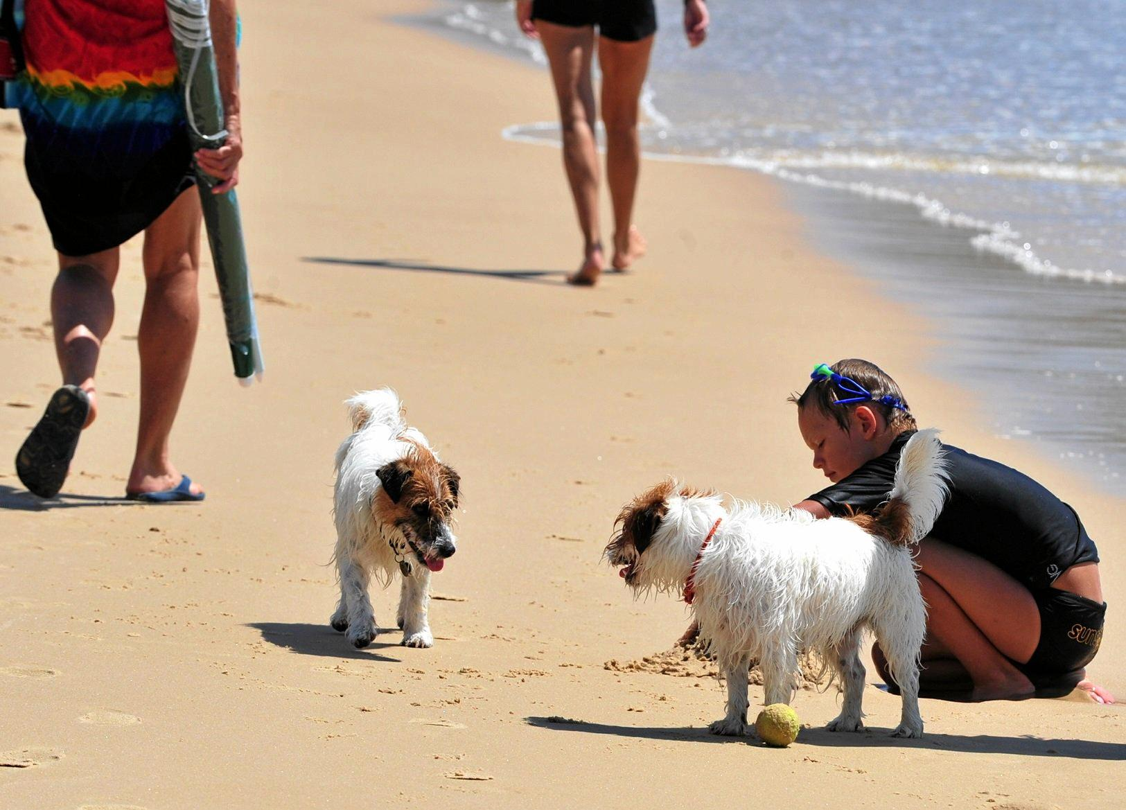 NO THREAT: These two friendly pooches were happily playing off leash at Sunshine Beach, but Council is putting dog owners on notice.