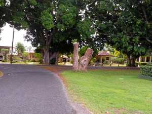 CVC to sit down with Aboriginal community over scar tree