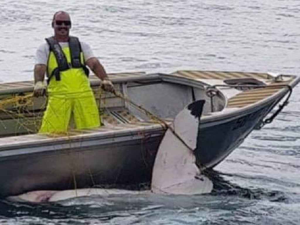 Fishing enthusiast Trapman Bermagui posted a photo to Facebook of the amazing moment this Department of Primary Industries employee caught the shark.
