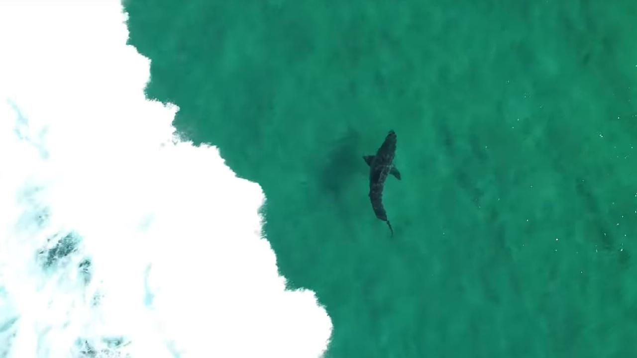 Of the 26 identified shark species that will attack humans unprovoked, 22 are found in Australian waters — including the deadly 'big three'.