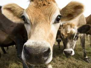 Is this the end of fresh milk?