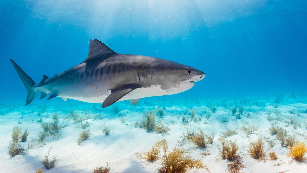 Despite the low likelihood of a fatal shark attack, the horrific nature of them is behind the increased fear.