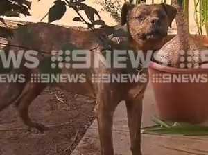 'Horrific': Aussie woman mauled by own dog