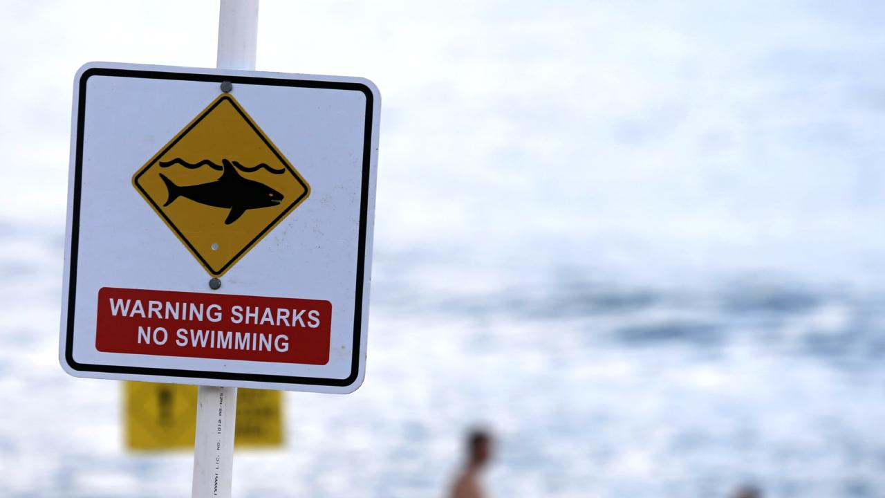You're five times more likely to die in your bath tub than be killed during a shark attack. Picture: John Grainger