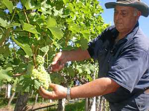 Ballandean wine a 'great white'