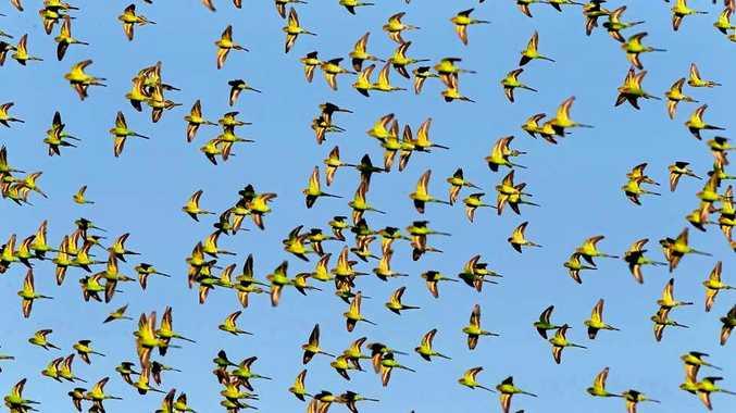 Birds the inspiration behind Aussie travels