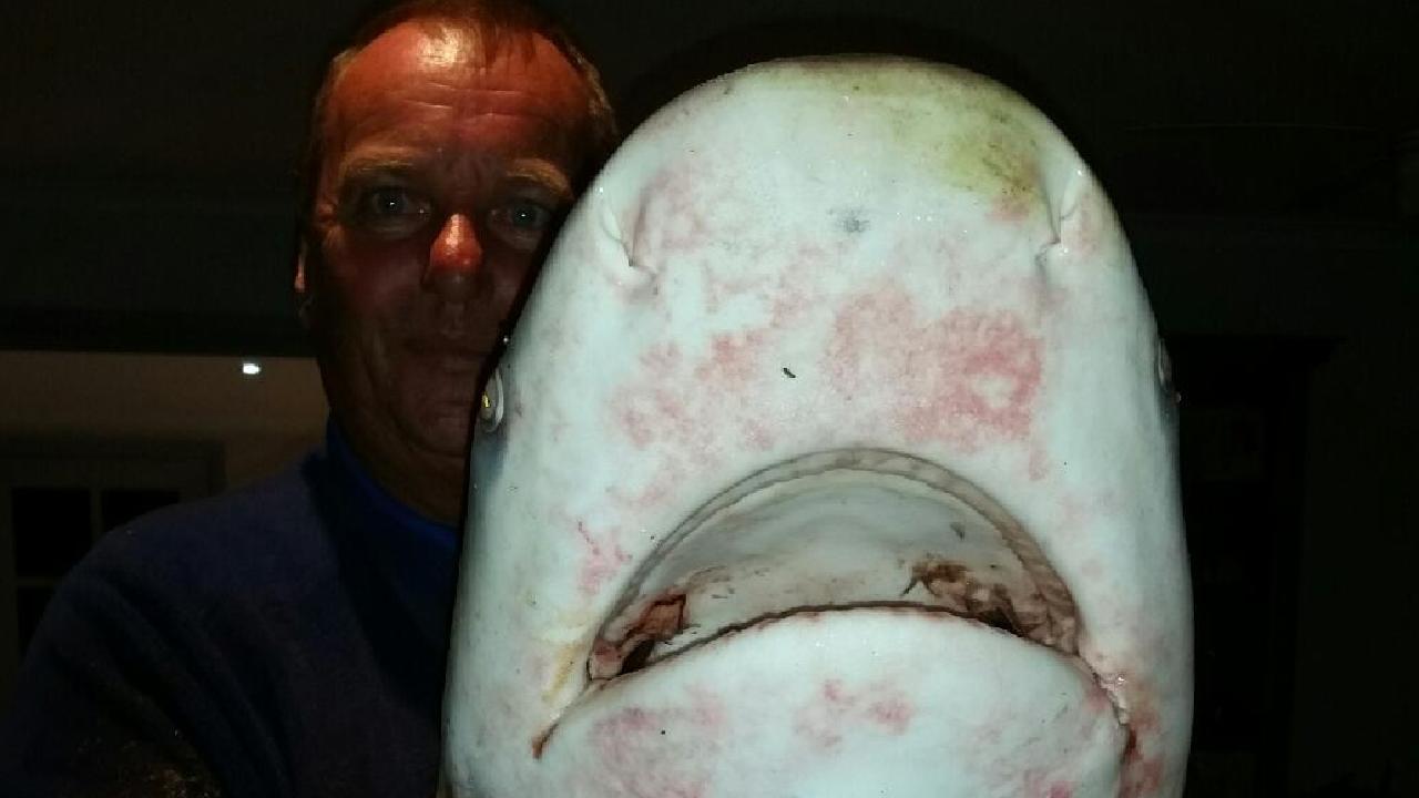 Stuart Parrant with the bull shark caught at Bribie Island Bridge last night.