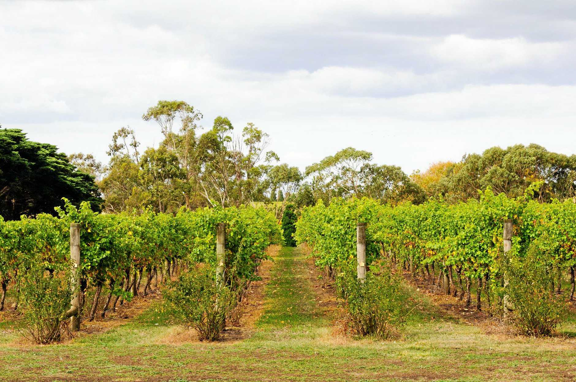 Bellarine Peninsula vineyards deliver some excellent fruit-driven cool-climate drops.