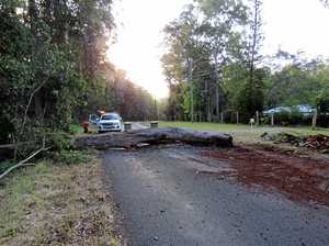 Tree falls out of the forest - blocks road