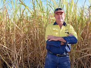 Proserpine cane growers welcome WTO action on India