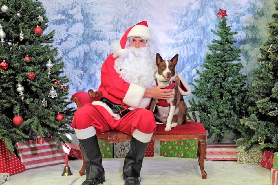 SEE SANTA:  Feed Barn Gladstone is hosting a Christmas Pet Photos event tomorrow, presented by Ride 4 Life .