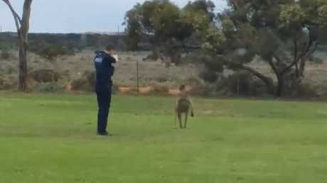 South Australian police having the authority to kill an animal in distress.