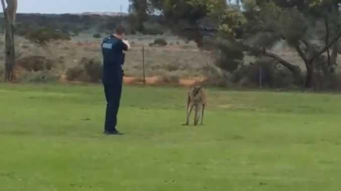 Police slammed for injured kangaroo shooting.