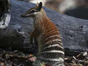 Australia's 'extinction crisis' laid bare